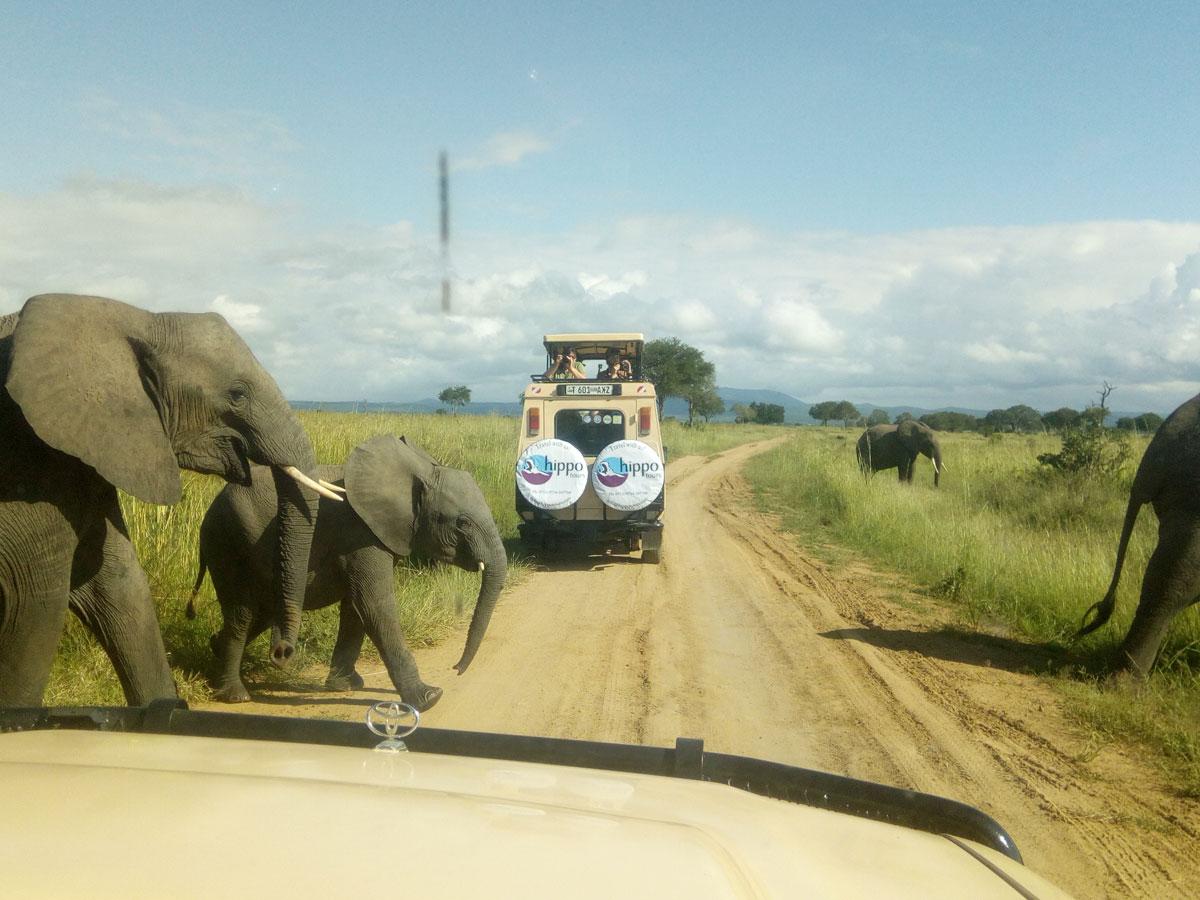 Hippo Tours & Safaris Gallery