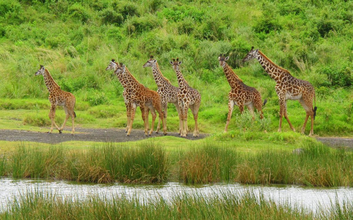 Arusha national park safari
